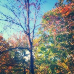 #fall #filtered #saturation (Taken with Instagram)