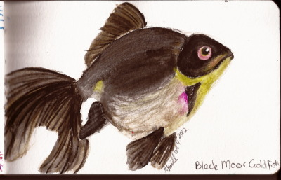 Black moor goldfish in watercolor pencils