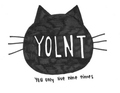 kitty yolo by ?- - -kara- - - on Flickr.
