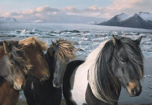 icelandwantstobeyourfriend:  Where the Domesticated Things Are