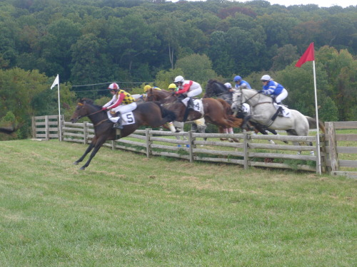 Legacy Steeplechases at Shawan Downs