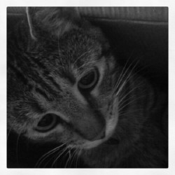 Peppy in a box. #kitty (Taken with Instagram)