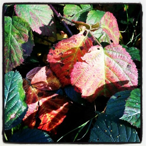 Changing #leaves #autumn #green #red  (Taken with Instagram)