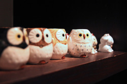 Owls in cup form. Doesn't get much cuter than this