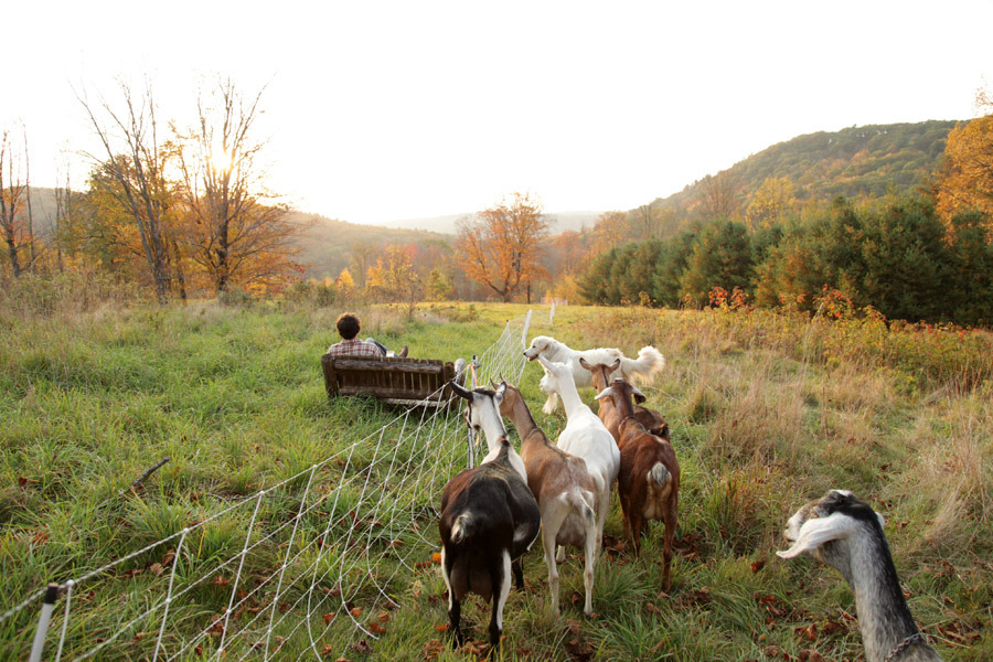 farmweather:  Sometimes you want to have a cocktail and watch the goats. And sometimes the goats want to watch you have a cocktail.