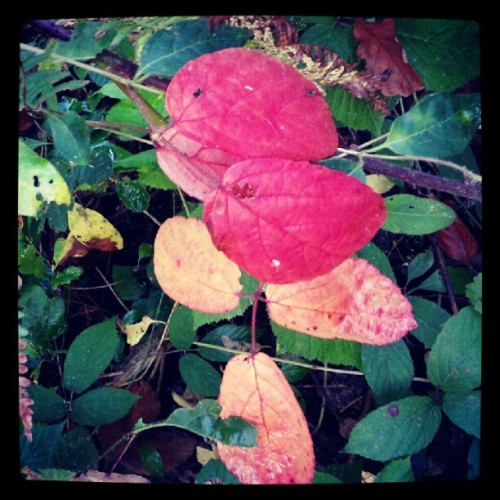Changing #leaves #autumn #green #red #yellow  (Taken with Instagram)