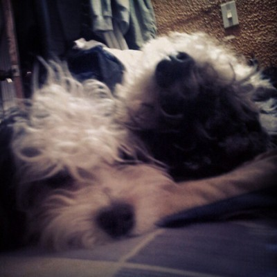 #Thomas & #Luna #Sleep #Dog #Pets #Opposite (Tomada con Instagram)