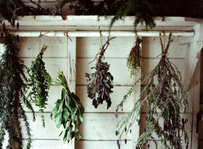 madamesommersprosse:  Drying herbs by amy merrick
