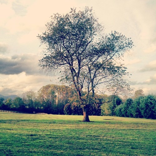 Tree.  (Taken with Instagram at Dillard House)