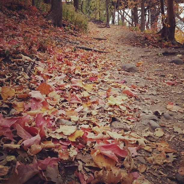 Fall walk along the river #minnesota #minneapolis #fall #autumn #trails #river (Taken with Instagram at White Sand Beach)
