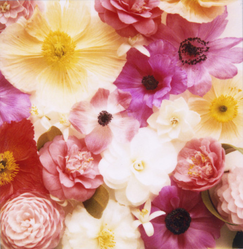 4doors:  mixedflowerscu by danske on Flickr.