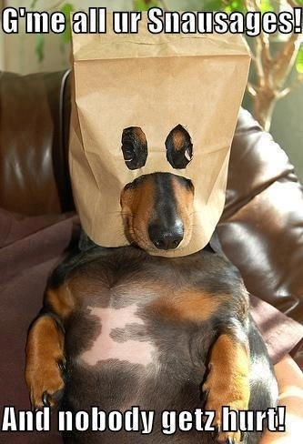 ilovedachshunds:  Happy Halloween ! Easy costume ! Hehe - Submitted by Laura Jo