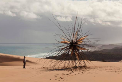 carex: