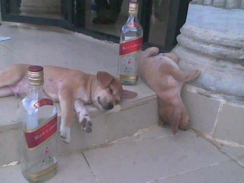 Go home dogs you are drunk