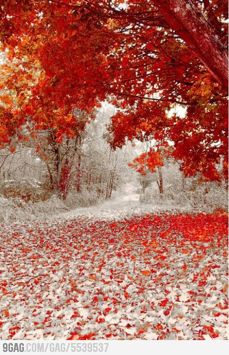 9gag:  Winter and Fall Meet Each Other