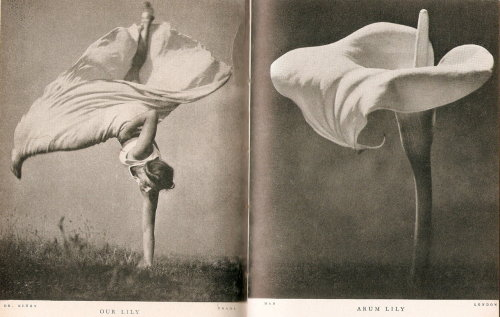 mirrormaskcamera:  'Lilliput' comparison (9): taken from 'Pocket Omnibus' (1937/38)