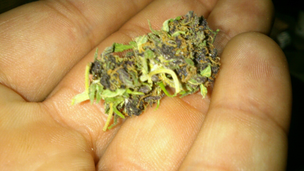 Blueberry purple