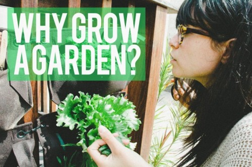 THE ROOKIE URBAN FARMER: 6 REASONS WHY YOU SHOULD START A GARDEN THIS FALLby Shauna Nep http://bit.ly/QVEK7J
