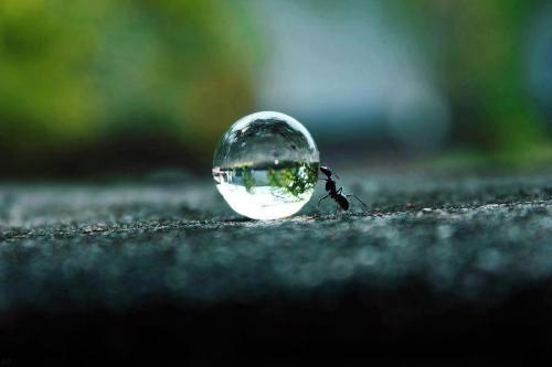 An ant pushing a drop of water
