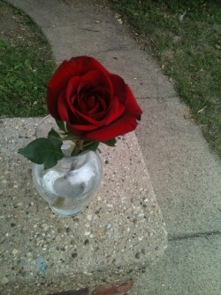 MY rose, I took this. No photoshop and i didnt copy off of anybody eklse, i just took it, so dont blame me if there is already a similar pic online, just enjoy :)