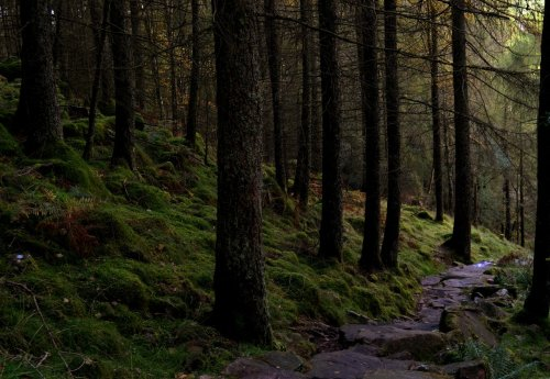 lori-rocks:  A forest path, Buttermere in the Lake District, England. by Mr Wanonymous