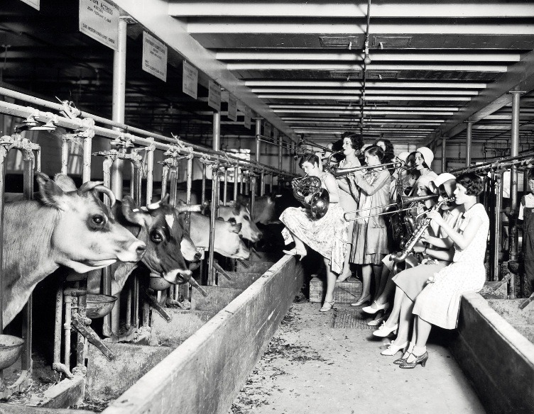 The Ingenues, an all-girls band and vaudeville act, serenading the cows in the University of Wisconsin-Madison Dairy Barn in a scientific test of whether the cows would give more milk to the soothing strains of music, 1930.