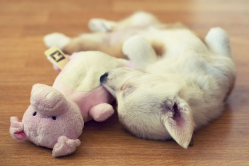 We love adorable photos of dog sleeping with their stuffed animals. How cute is this one?!  (Via emmathebean: Hey Tumblr, if you have a minute to kill - I've submitted one of my favorite photos for a contest. Please go vote for us!)