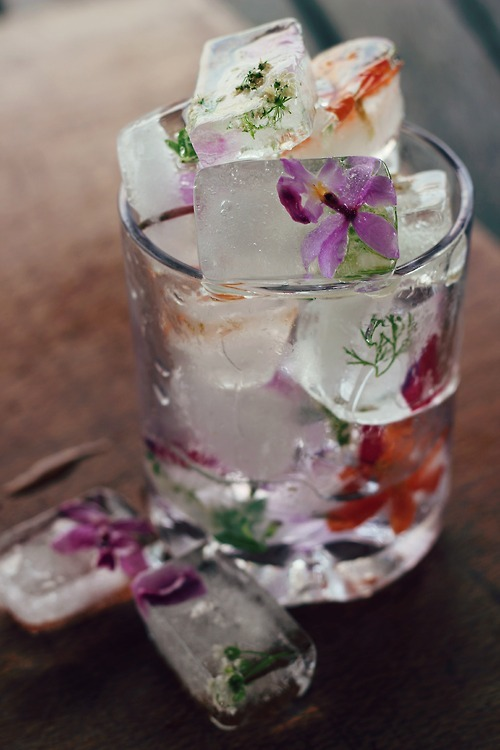 butterfly-diaries:  DIY Floral Ice Cubes What a beautiful idea! Probably meant more for the spring time, but either way very pretty. I could see these being a big catch at a wedding party.