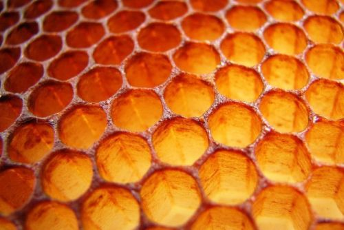 PHOTO: Honeycomb [via Justus Thane; Flickr]