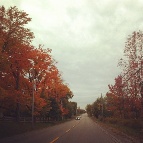 Today's Drive 🍁🍂🍃 #instamood #instaphoto #instashot #instamoment #instagood #iphoto #iphone4 #personal #instago #fall #autumn #leaves #trees #branches #colourful #streetphotography #iphotography #instaphotography #street #road #sky #clouds #happysunday #happythanksgiving #thanksgiving  (Taken with Instagram)