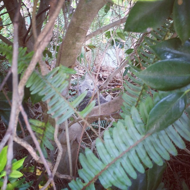 I found a cat monster sleeping in the bushes #fang  (Taken with Instagram)