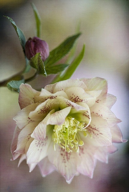 A touch of spring by Jacky Parker Floral Art on Flickr