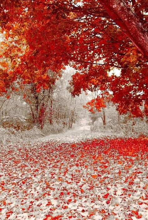 ashinningstar2012:  (via 4 Seasons - Nature's calender / First snow fall in Minnesota)