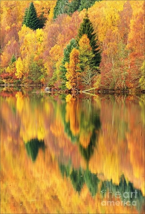 moondancehooper:   Fall