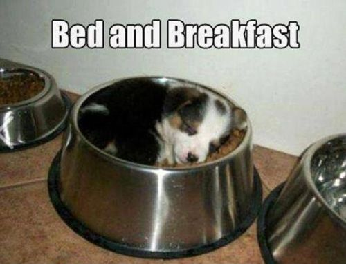 The real bed and breakfast