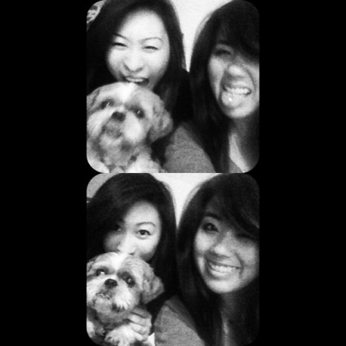Hungry for #shihtzus 😉 #shihtzu #bestfriends #korean #chink #sillies #funnypic #dog #puppylove #adorable  (Taken with Instagram)