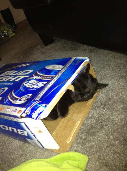 last i checked, cats were non-alcoholic…