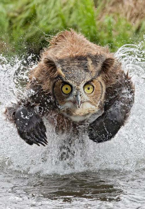ataulfomangos:  whatfreshhellisthis:  OWLBEAR  no fuck that  Nice! Now I know why these would scare heavily armed D&D adventurers!