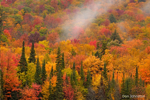 "Ontario is known for its spectacular fall colors. Don Johnston came across this hillside of maples and spruces near Dorset in the Muskoka region of the province, southwest of Algonquin Provincial Park. He quickly photographed the scene while wispy clouds hugged the treetops. ""There are plenty of photo opportunities in this area,"" the Ontario resident says. He used a Nikon D3x and a 200-400mm lens. (via Photo of the Week: Ontario Orange - National Wildlife Federation)"