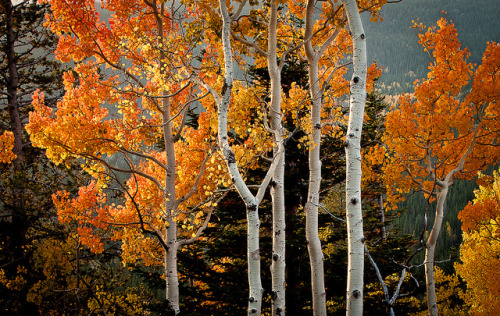 fall in colorado {explored} by JPutsch on Flickr.