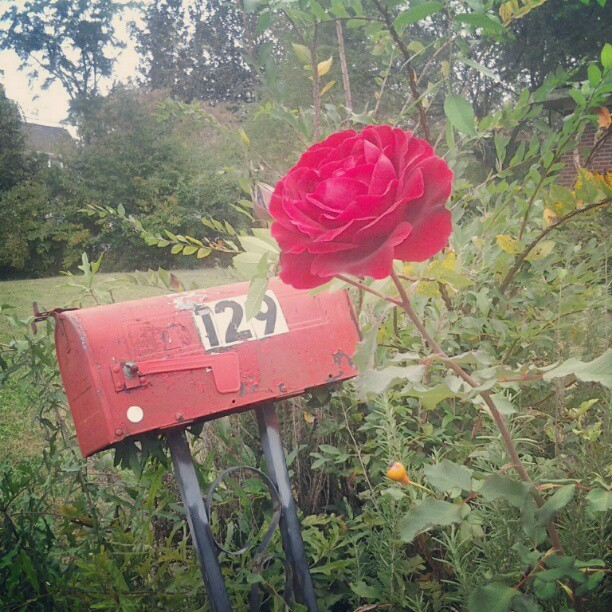 Autumn bloom #flower #pretty #red #green #georia #athens  (Taken with Instagram)