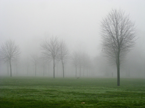 Morning Fog in Hyde Park on Flickr.