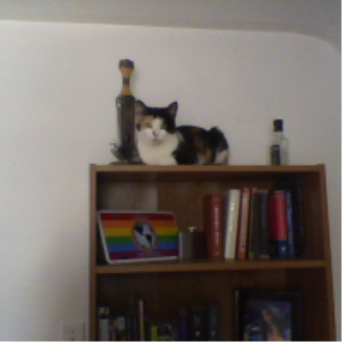 get down from there cat. that is not a throne. it doesn't even have a cushion. and don't think you can talk me in to putting one up there.