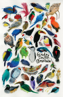 eatsleepdraw:  Birds of South America leah zobott | tumblr | cargo