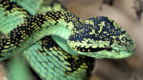 (via ABC news)  Busted for Trying to Board Plane With 27 Snakes A Brazilian man was arrested for trying to board a flight at Orlando International Airport while carrying 27 snakes that he'd wrapped in pantyhose and stashed away in inside stereo speakers,  authorities said. If you are buying exotic animals, you are supporting this!