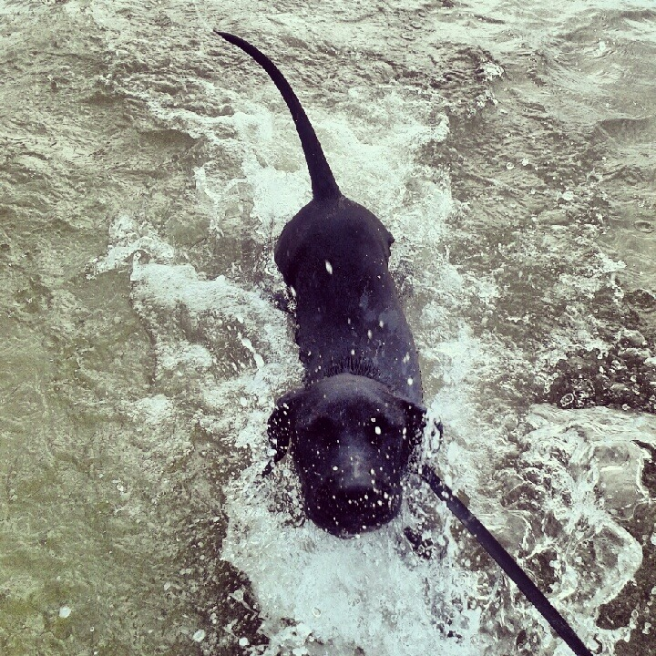 #justkeepswimming #puppy
