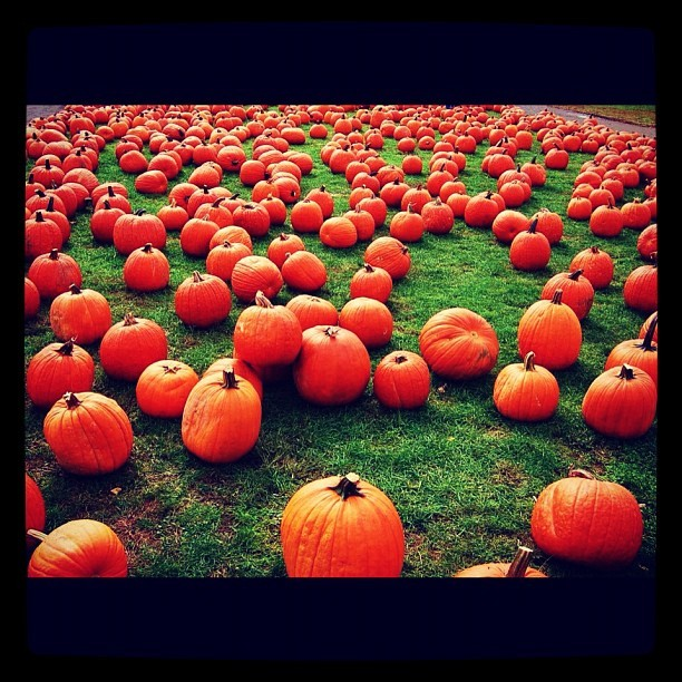 Pumpkin pickin #pumpkin #fall #autumn #picking #whitepostfarms (Taken with Instagram)
