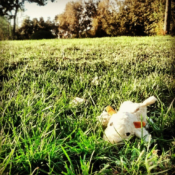 #lost #dog #toy in the #grass (Taken with Instagram)