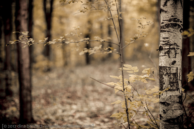 Beyond the birch by dina bennett on Flickr.
