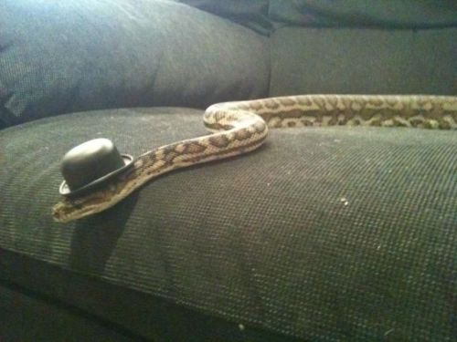 This snake has more style than I do